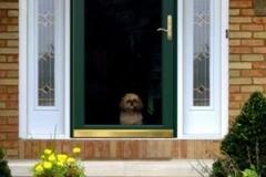 Door with Dog - East Hanover, NJ - Lifetime Aluminum