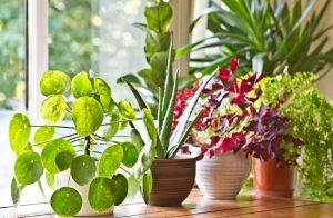 Plants in Pots Displayed in Front of Garden Window